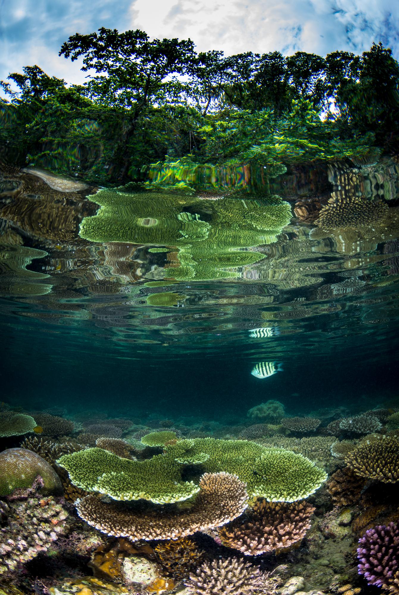 Photo: Matt Curnock/Coral Reef Image Bank