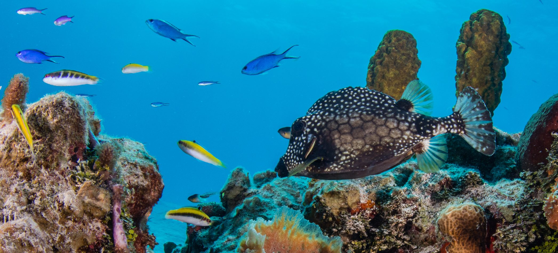 Photo: Philip Hamilton/Coral Reef Image Bank