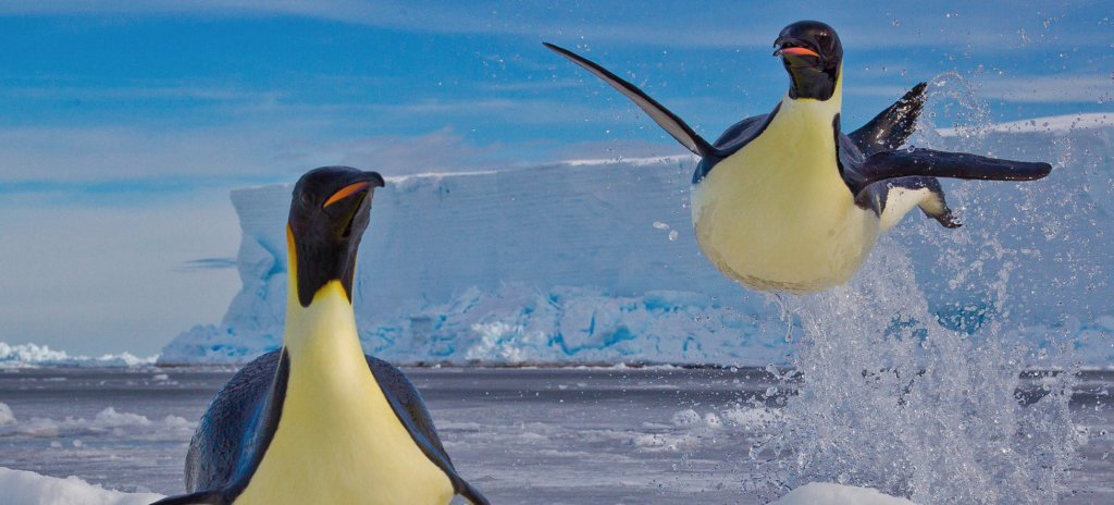 Photo: Paul Nicklen