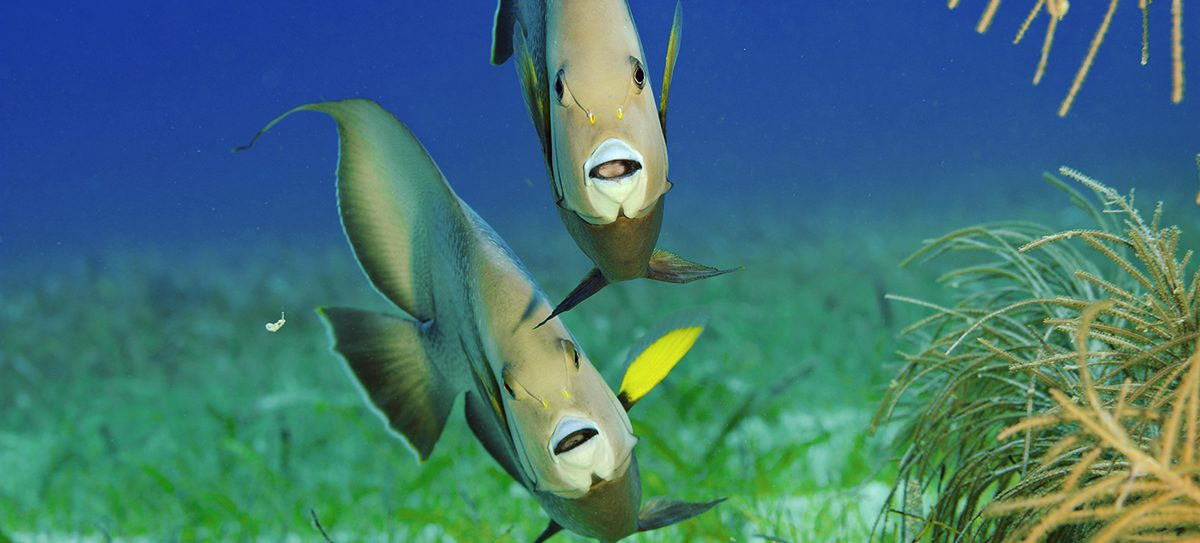 Photo: Brian Skerry