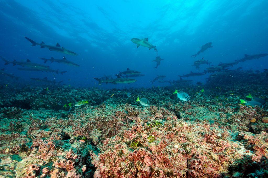 Blue Parks - Galapagos