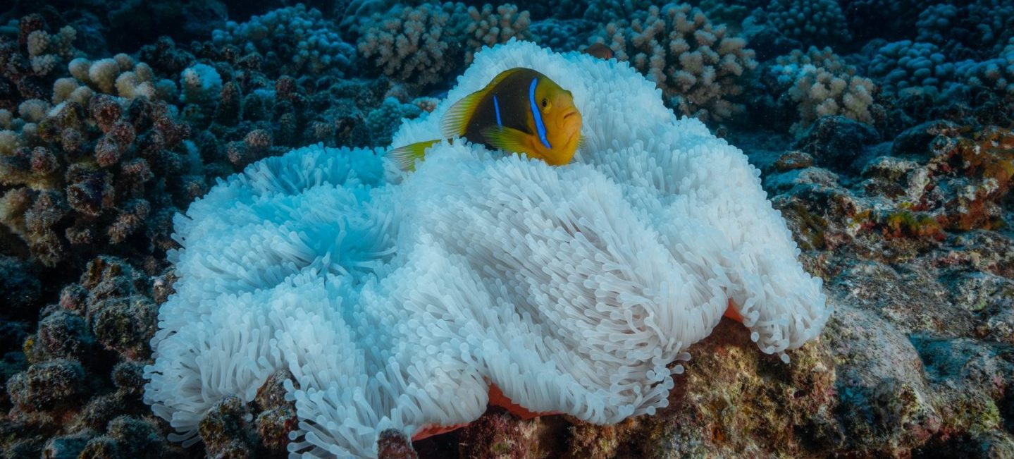"""<a href=""""//new.marine-conservation.org/about/"""""""" target=""""""""_blank"""""""" rel=""""noopener noreferrer"""">Photo: Cristina Mittermeier/SeaLegacy</a>"""