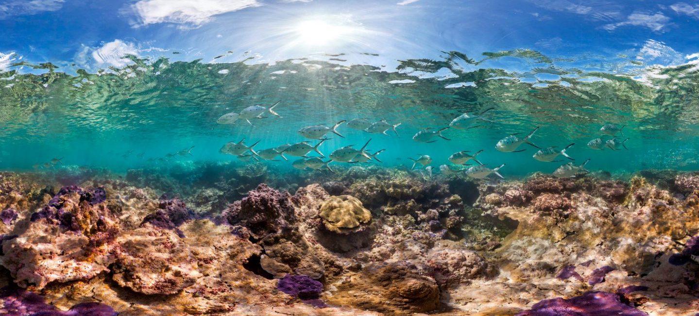 Photo: The Ocean Agency | NOAA Fisheries